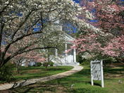 Dogwoods and Church