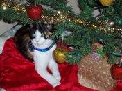 Luna Under Christmas Tree