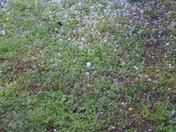 Hail Storm 31-Mar-2012 010.JPG