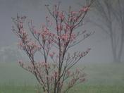 Hail Storm 31-Mar-2012 016.JPG
