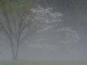 Hail Storm 31-Mar-2012 017.JPG