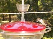 hummingbird on my porch