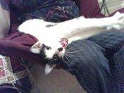 Lost Kitten Finds Instant Love