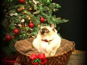 Christmas 2010 002.jpg