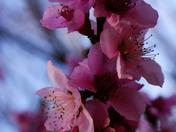 Purple flowers...Paris Mountain