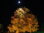 Fall Splendor in the Moonlight