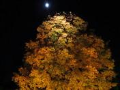 Fall Splendor in the Moonlight *