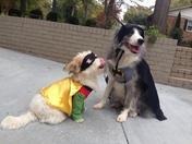 Happy HOWLoween from Batdog and Pupin!
