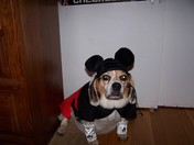 Pebbles the Mickey Mouse