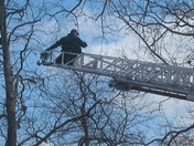 Fire Men rescue cat from tree