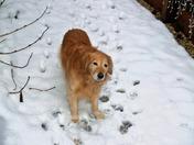 Snow Dog Shadow!