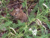 Bunny in the flower bed