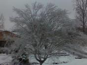 Beautiful Tree, T.R., SC