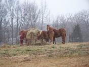 Horses in Snow!