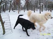 DOGS LOVIN THE SNOW