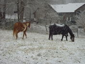 Horses standing out in the Snow