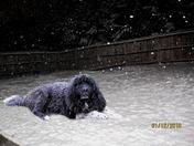 Tristan Snow Dog at Lake Bowen