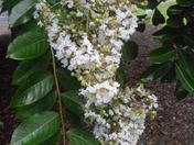 flowers 033.JPG
