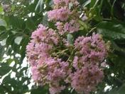 flowers 046.JPG