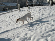 Angie playing in the snow