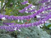 flowering bridge  lake  lure 081.JPG