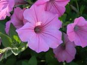 flowering bridge  lake  lure 105.JPG