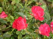 flowering bridge 026.JPG