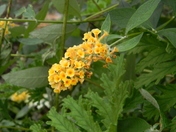 flowering bridge 042.JPG