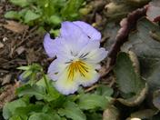 flowering bridge 054.JPG