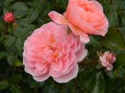 flowering bridge 028.JPG
