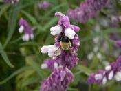 flowering bridge 079.JPG
