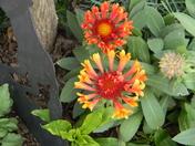 flowering bridge 094.JPG