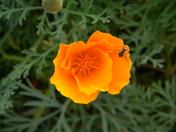 flowering bridge 098.JPG