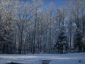 Snow-Trees-Junior-and-Edies- House-02-13-2010.jpg
