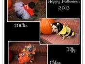 Dogs love Halloween too!