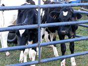 Farm Day 008.jpg