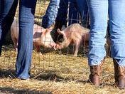 Farm Day 011.jpg