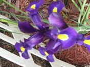 Spring Apr 20 2011 009.JPG