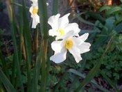 pretty white flower.jpg