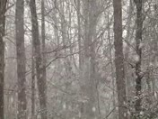 Thundersnow in Simpsonville