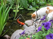 Sammy by the pond