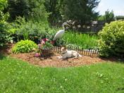 Sammy sunning by the back yard pond