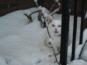 Purrl in the snow