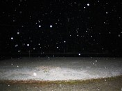 snow falling in front yard 2009.JPG