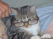 Tigger, dad's smart cat