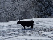 All alone in the snow
