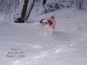 March Snow 2009