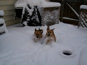 Peebles & BamBam playing in the snow