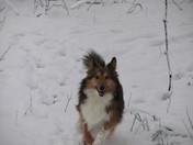 Sophie enjoying the snow!