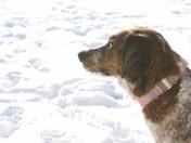 Cassie Enjoying The Snow
